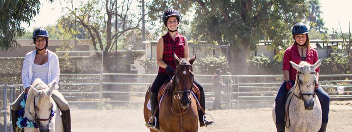 about Taking The Reins